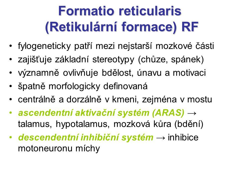 Formatio reticularis (Retikulární formace) RF
