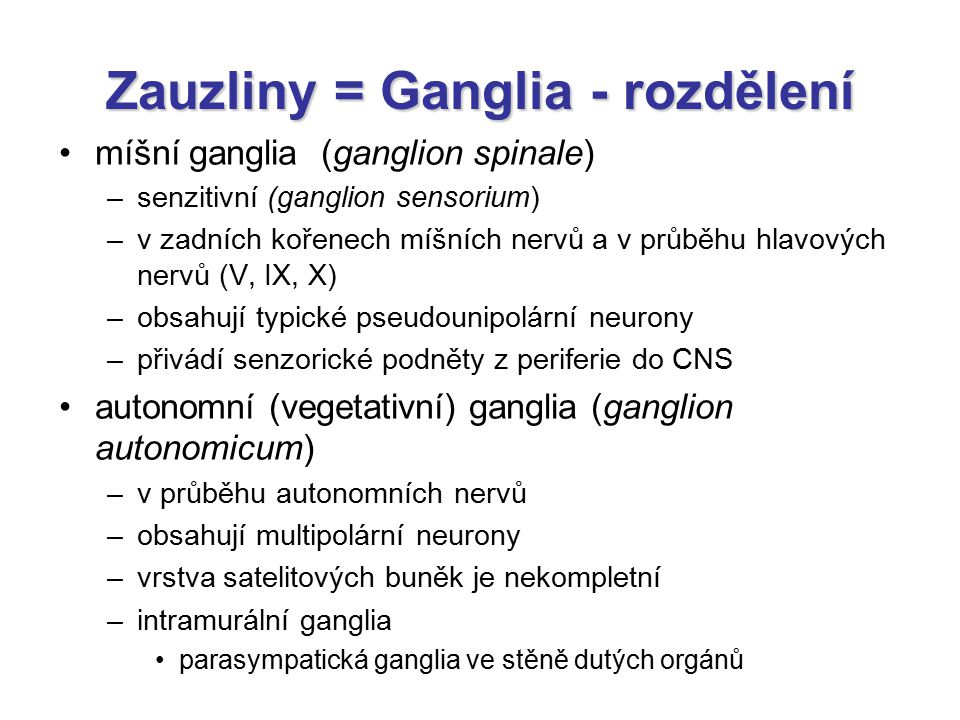 Zauzliny = Ganglia - rozdělení
