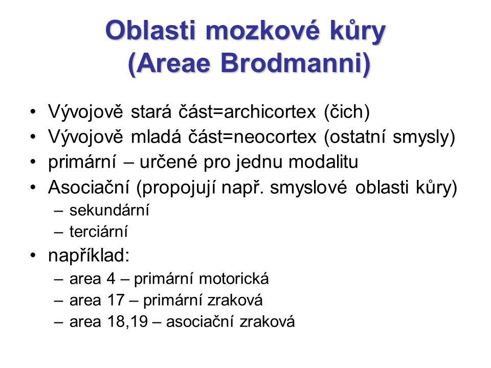 Oblasti mozkové kůry (Areae Brodmanni)