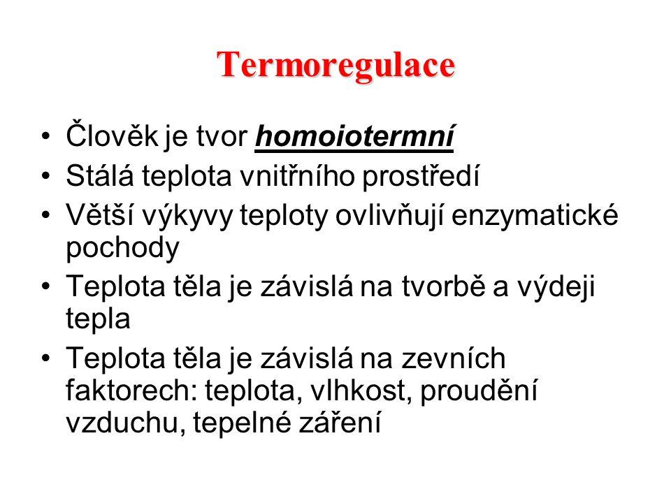 Termoregulace Člověk je tvor homoiotermní