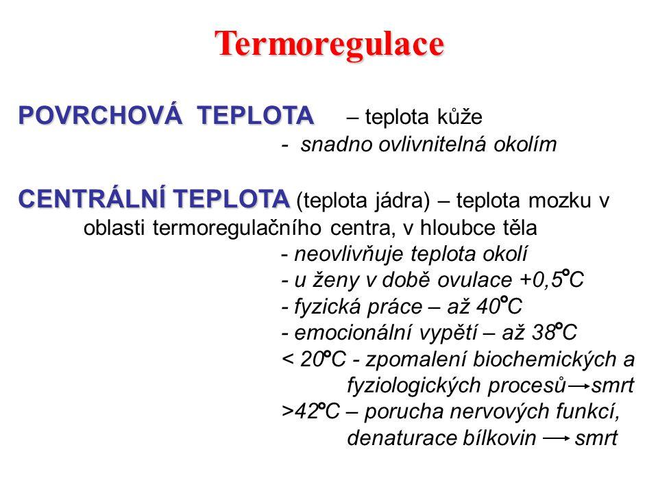 Termoregulace POVRCHOVÁ TEPLOTA – teplota kůže