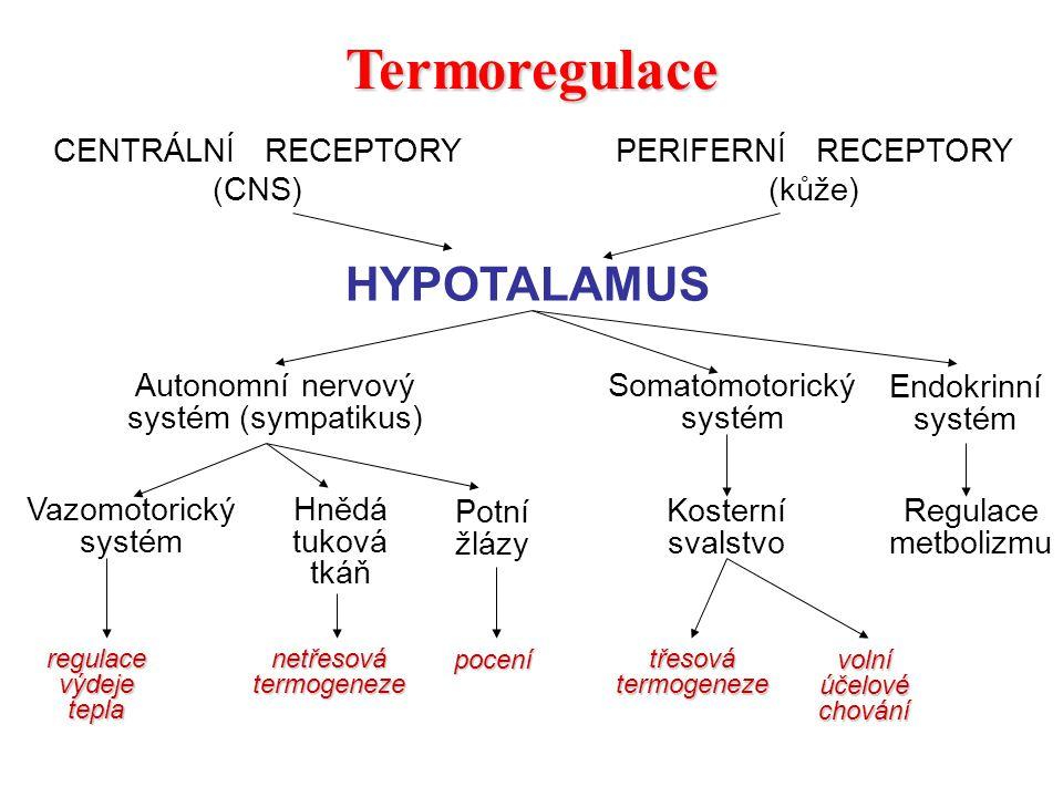 Termoregulace HYPOTALAMUS CENTRÁLNÍ RECEPTORY (CNS)