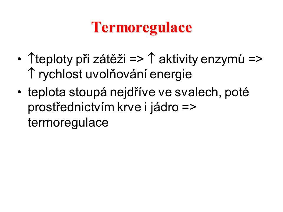Termoregulace teploty při zátěži =>  aktivity enzymů =>  rychlost uvolňování energie.