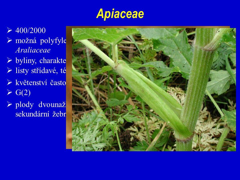 Apiaceae 400/2000. možná polyfyletická skupina z bazálních, zřejmě parafyletických Araliaceae. byliny, charakteristický habitus.