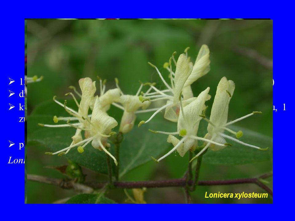 Lonicera xylosteum Lonicera xylosteum. Caprifoliaceae. 12/330; převážně severní mírný pás a hory tropů (chybí v Africe)