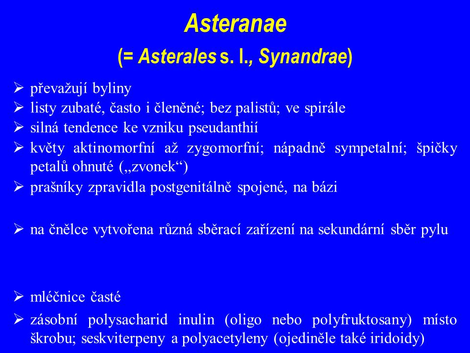 Asteranae (= Asterales s. l., Synandrae)