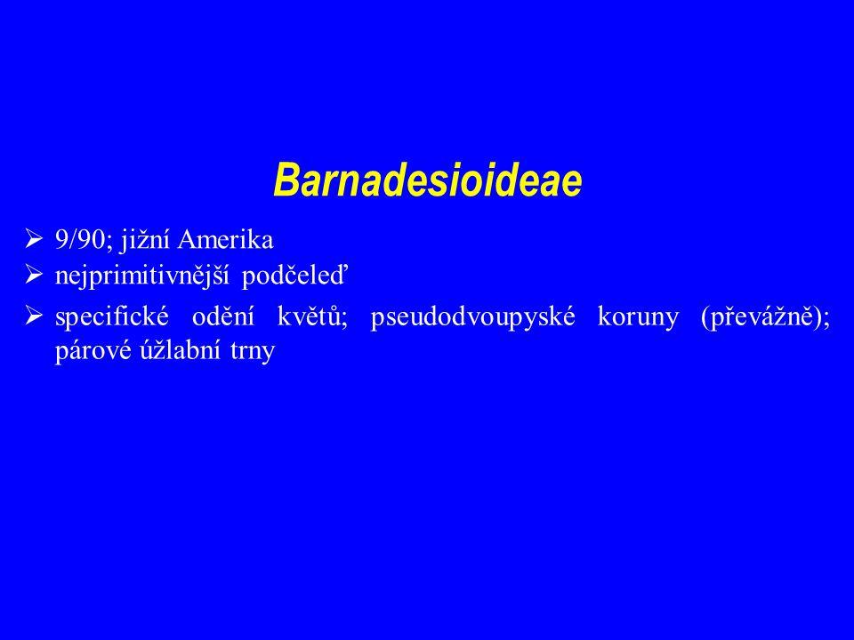 Barnadesioideae 9/90; jižní Amerika nejprimitivnější podčeleď