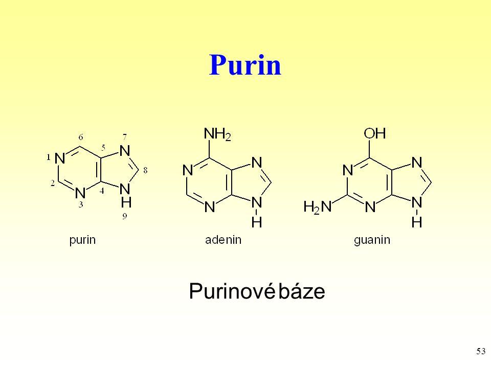 Purin Purinové báze