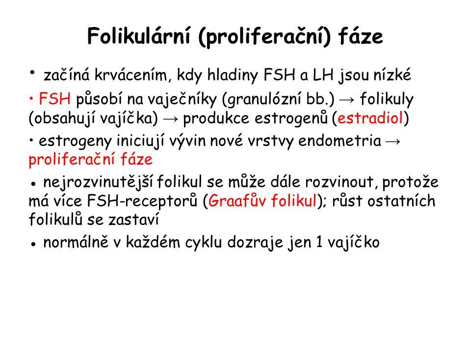 Folikulární (proliferační) fáze