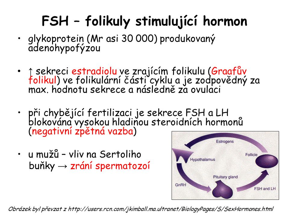 FSH – folikuly stimulující hormon