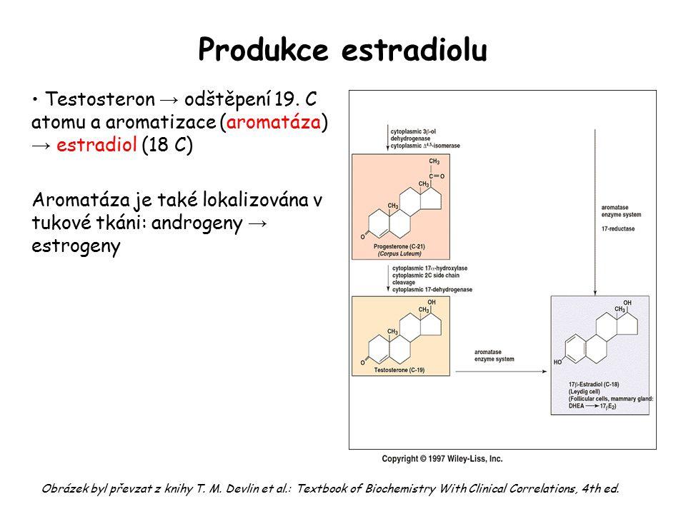 Produkce estradiolu Testosteron → odštěpení 19. C atomu a aromatizace (aromatáza) → estradiol (18 C)