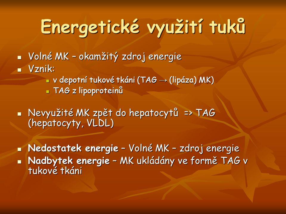 Energetické využití tuků