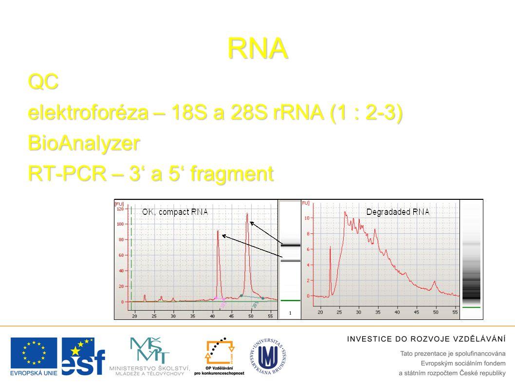 RNA QC elektroforéza – 18S a 28S rRNA (1 : 2-3) BioAnalyzer