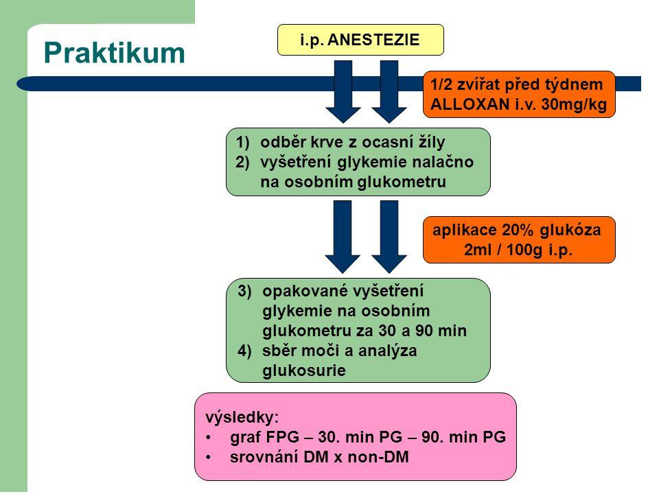 Praktikum i.p. ANESTEZIE 1/2 zvířat před týdnem ALLOXAN i.v. 30mg/kg