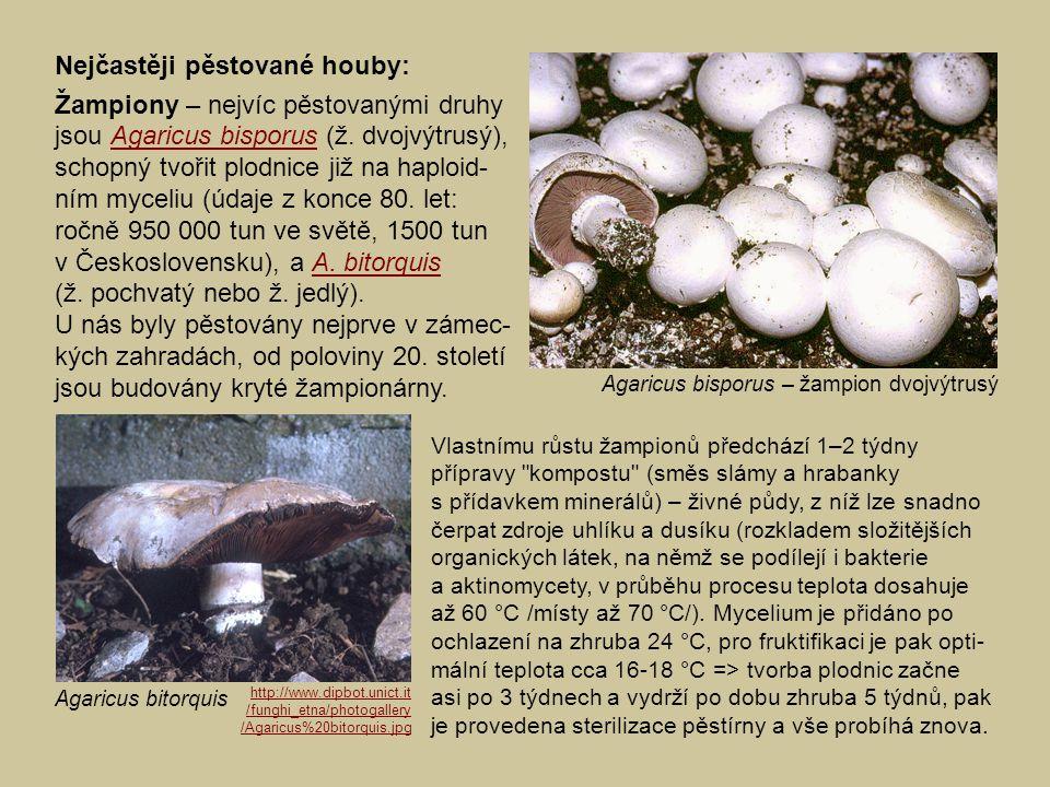 Nejčastěji pěstované houby: