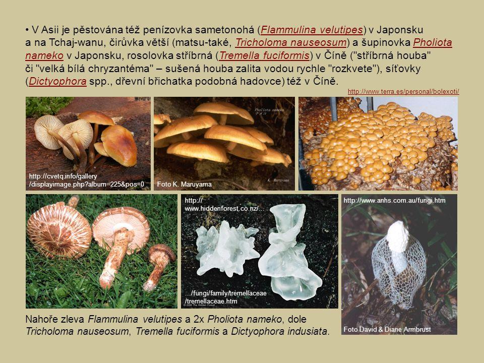 • V Asii je pěstována též penízovka sametonohá (Flammulina velutipes) v Japonsku a na Tchaj-wanu, čirůvka větší (matsu-také, Tricholoma nauseosum) a šupinovka Pholiota nameko v Japonsku, rosolovka stříbrná (Tremella fuciformis) v Číně ( stříbrná houba či velká bílá chryzantéma – sušená houba zalita vodou rychle rozkvete ), síťovky (Dictyophora spp., dřevní břichatka podobná hadovce) též v Číně.