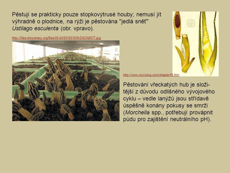 Pěstují se prakticky pouze stopkovýtrusé houby; nemusí jít výhradně o plodnice, na rýži je pěstována jedlá sněť Ustilago esculenta (obr. vpravo).