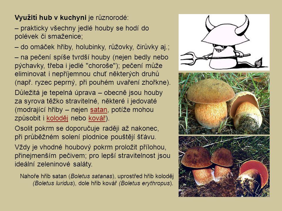 Využití hub v kuchyni je různorodé: