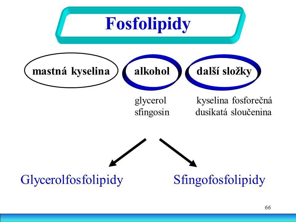 Fosfolipidy Glycerolfosfolipidy Sfingofosfolipidy