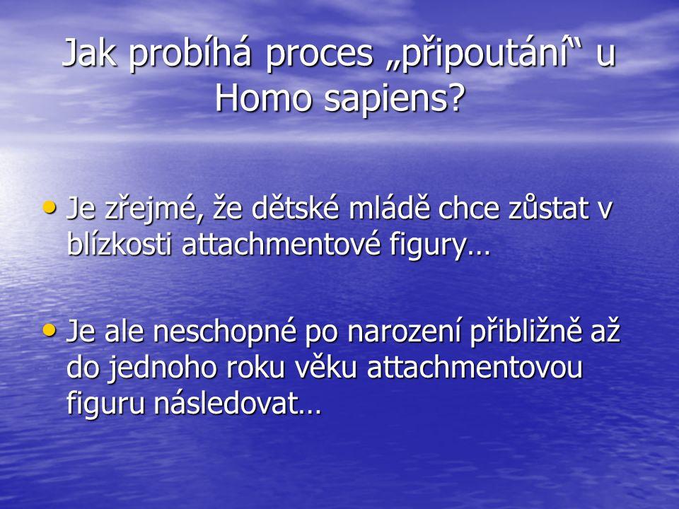 """Jak probíhá proces """"připoutání u Homo sapiens"""