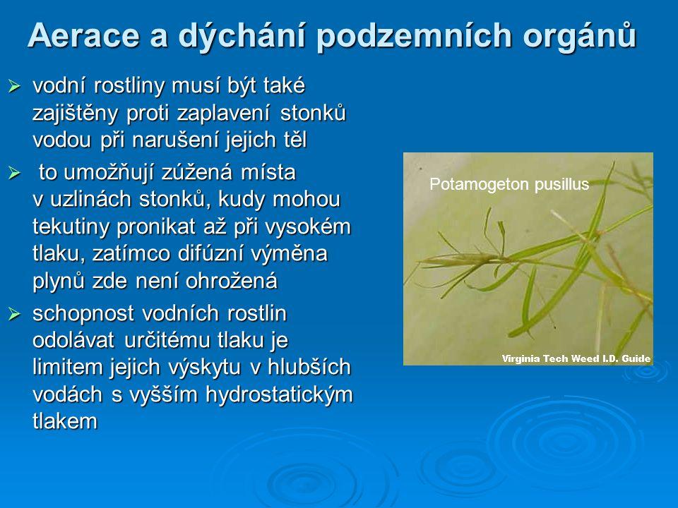 Aerace a dýchání podzemních orgánů