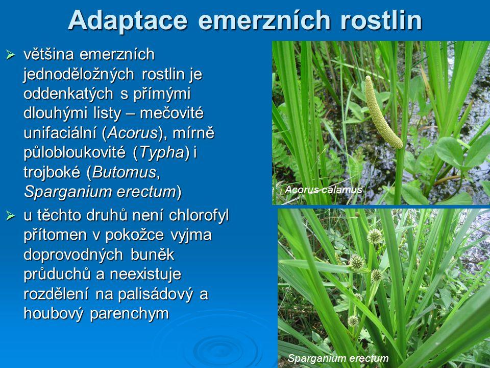 Adaptace emerzních rostlin