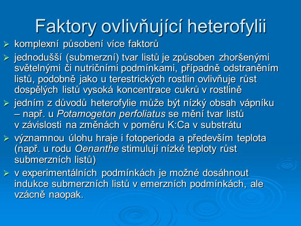 Faktory ovlivňující heterofylii
