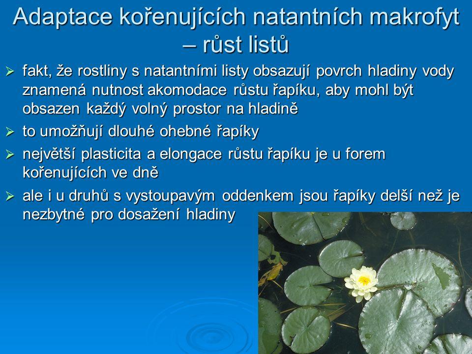 Adaptace kořenujících natantních makrofyt – růst listů