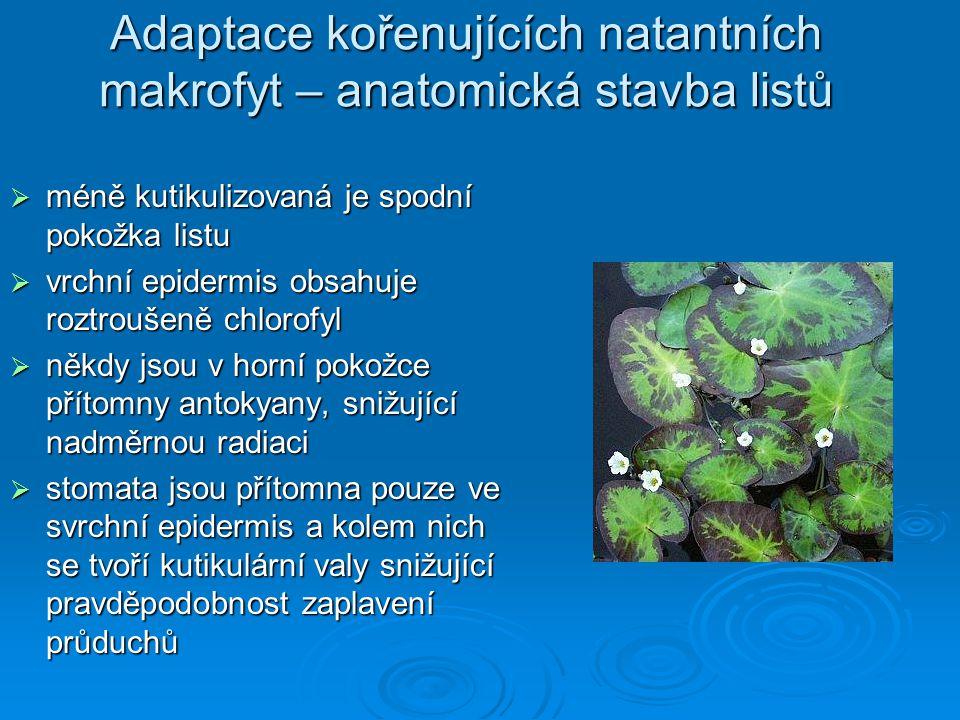 Adaptace kořenujících natantních makrofyt – anatomická stavba listů