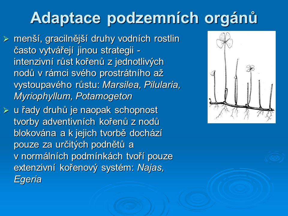 Adaptace podzemních orgánů