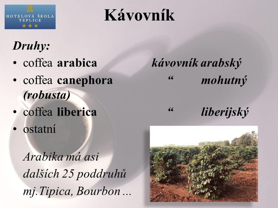 Kávovník Druhy: coffea arabica kávovník arabský