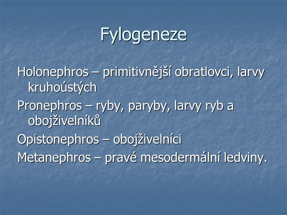 Fylogeneze Holonephros – primitivnější obratlovci, larvy kruhoústých
