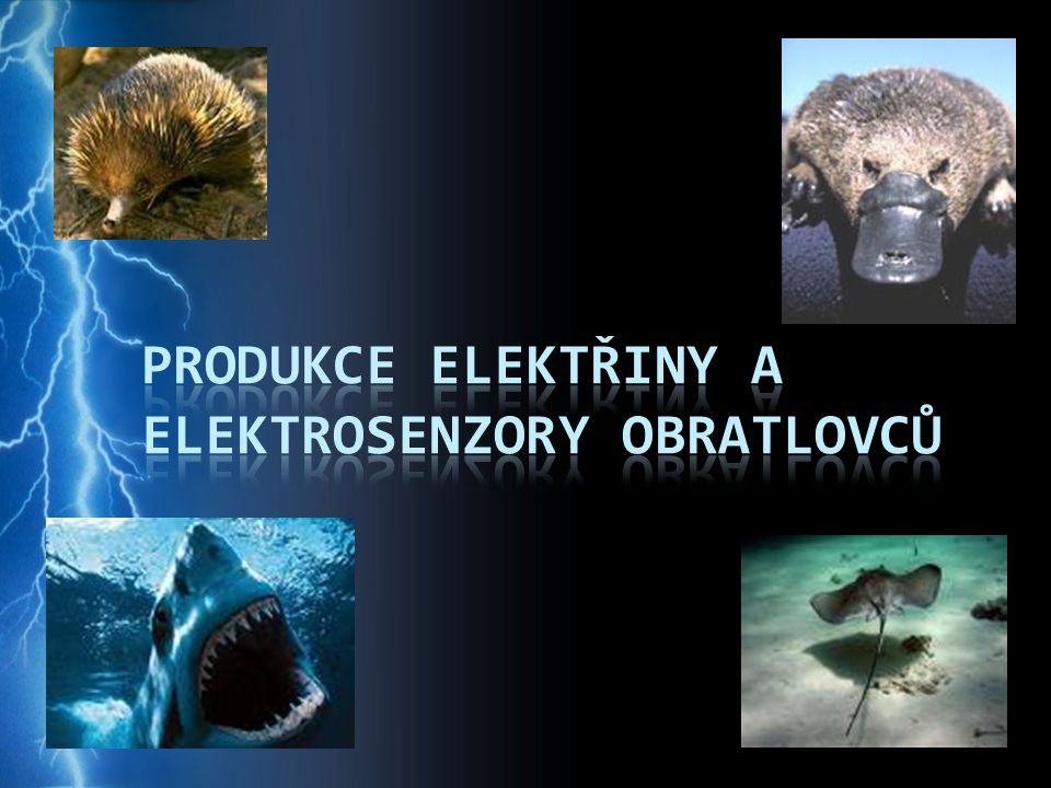 Produkce elektřiny a elektrosenzory obratlovců