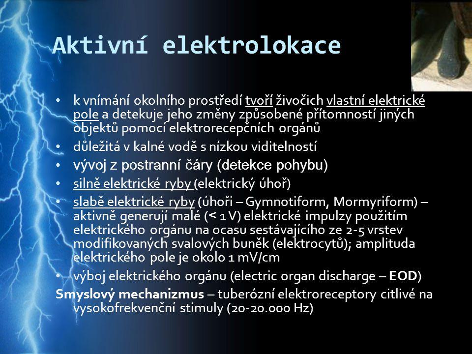 Aktivní elektrolokace