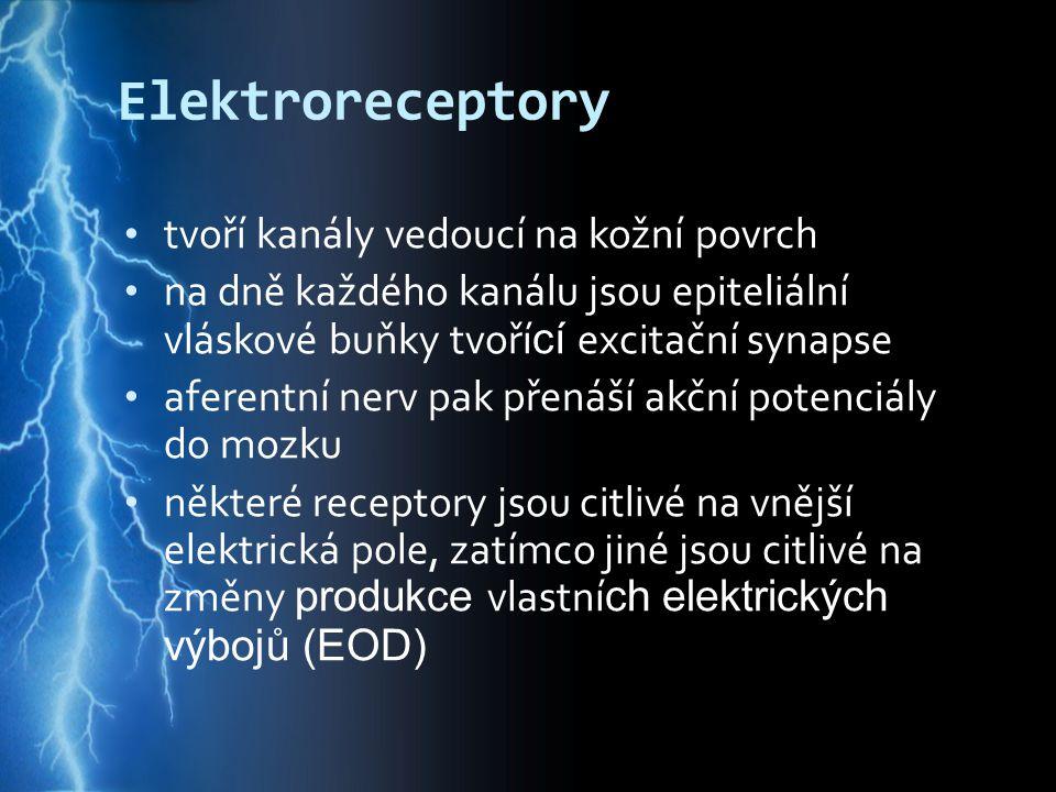 Elektroreceptory tvoří kanály vedoucí na kožní povrch