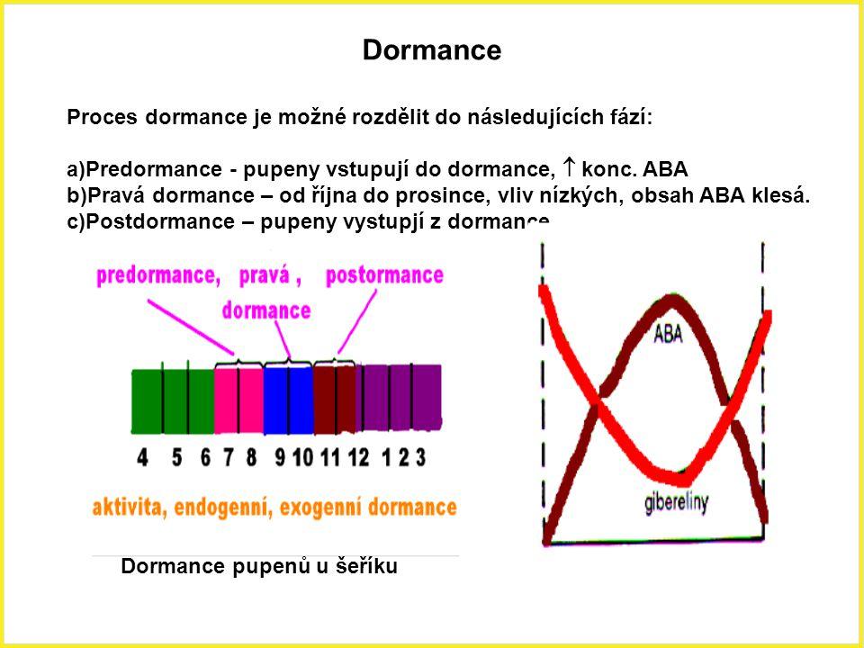 Dormance Proces dormance je možné rozdělit do následujících fází: