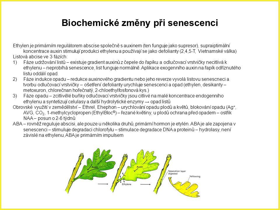 Biochemické změny při senescenci