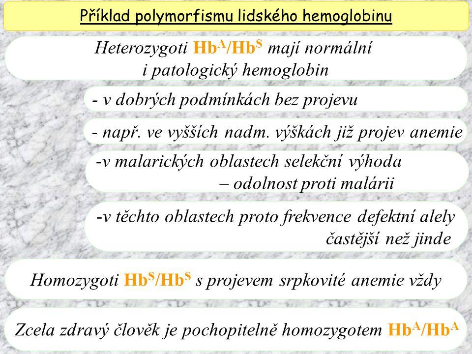 Heterozygoti HbA/HbS mají normální i patologický hemoglobin