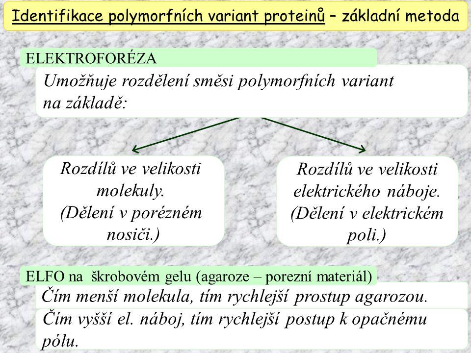 Identifikace polymorfních variant proteinů – základní metoda