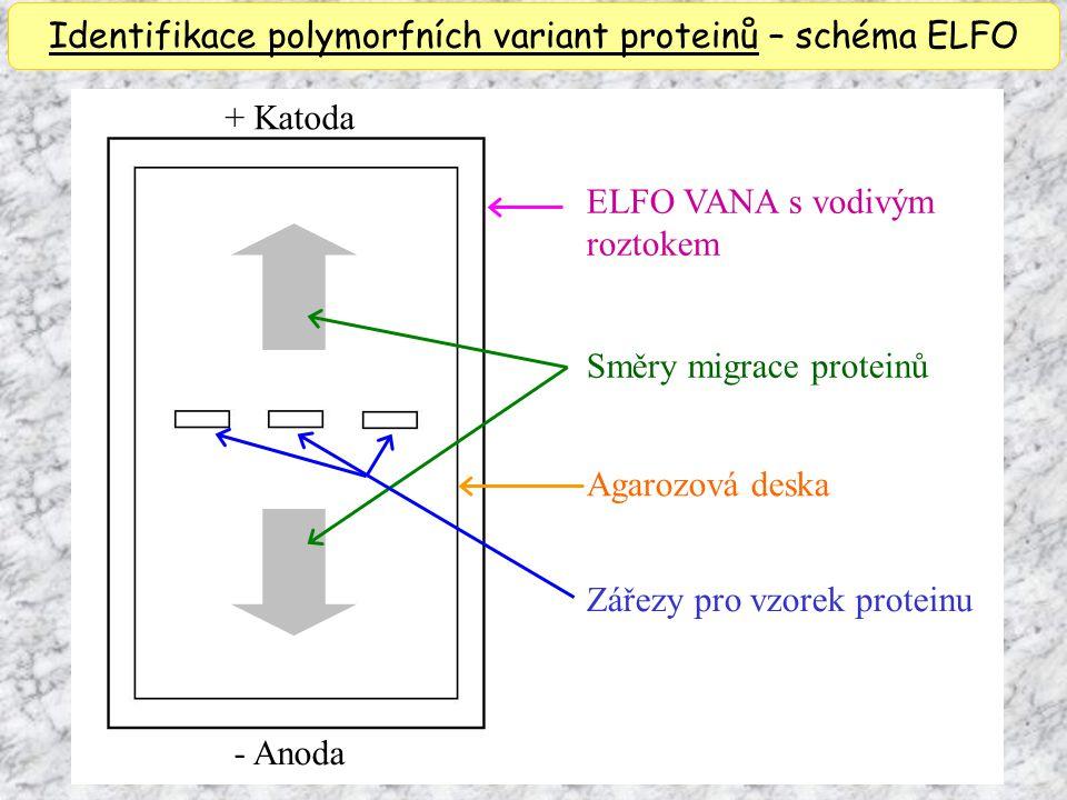 Identifikace polymorfních variant proteinů – schéma ELFO