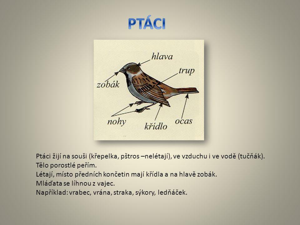 PTÁCI Ptáci žijí na souši (křepelka, pštros –nelétají), ve vzduchu i ve vodě (tučňák). Tělo porostlé peřím.