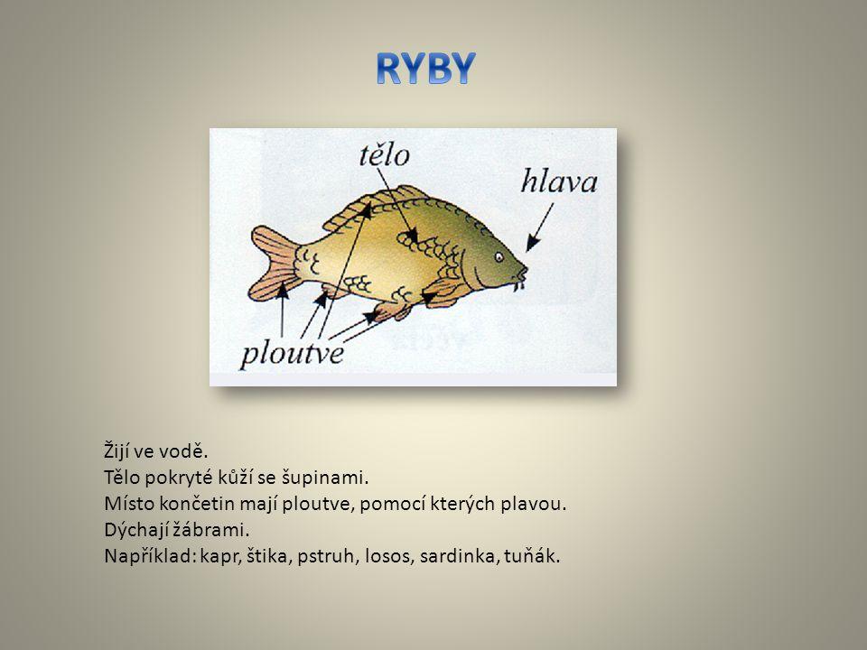 RYBY Žijí ve vodě. Tělo pokryté kůží se šupinami.