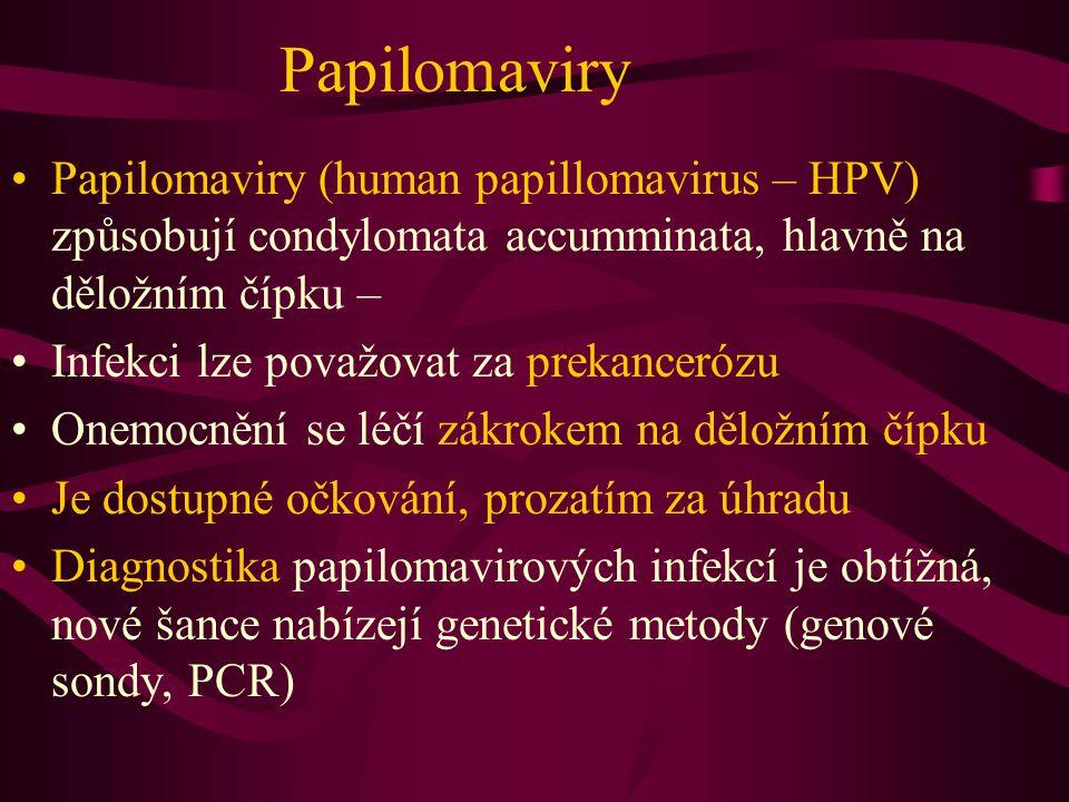 Papilomaviry Papilomaviry (human papillomavirus – HPV) způsobují condylomata accumminata, hlavně na děložním čípku –