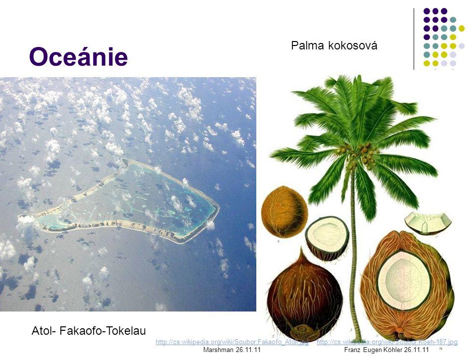 Oceánie Palma kokosová Atol- Fakaofo-Tokelau