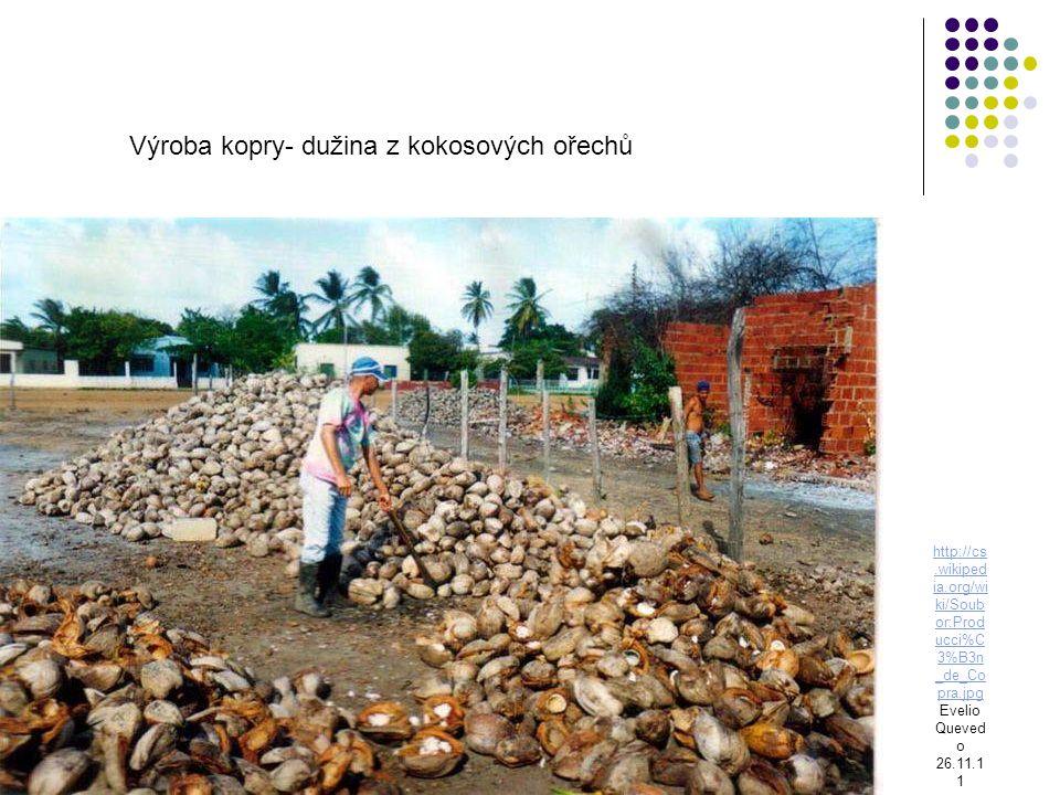 Výroba kopry- dužina z kokosových ořechů