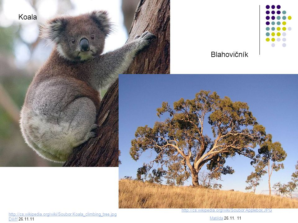 Koala Blahovičník http://cs.wikipedia.org/wiki/Soubor:Applebox.JPG