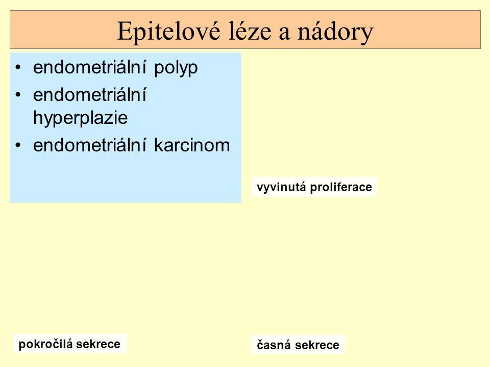 Epitelové léze a nádory