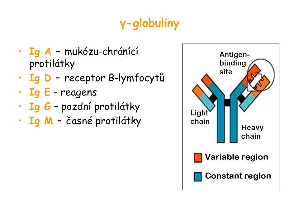γ-globuliny Ig A – mukózu-chránící protilátky