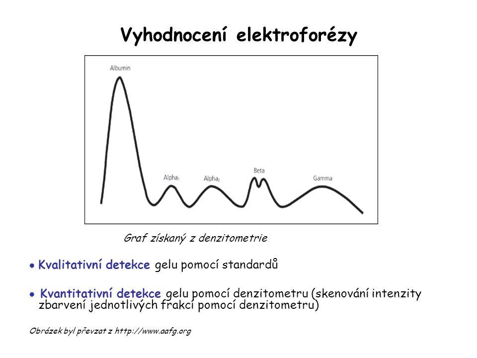 Vyhodnocení elektroforézy