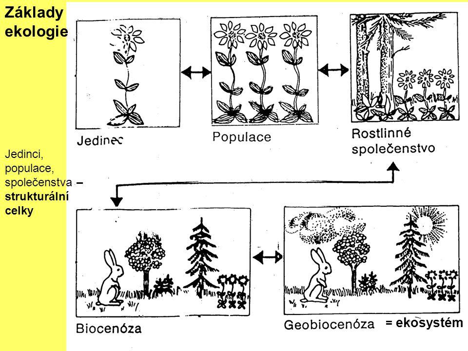 Základy ekologie Jedinci, populace, společenstva – strukturální celky